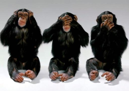 Image result for pics of 3 monkeys see no evil
