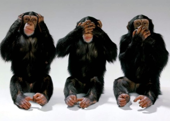 Image result for pics of see no evil monkeys